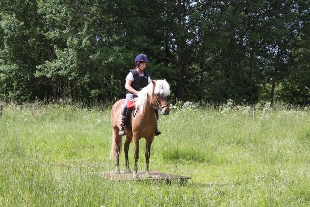 TREC-tävling: få hästen att gå upp och stå still på hinder
