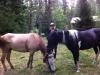 Madde och hästar under lunchpaus på kartritten