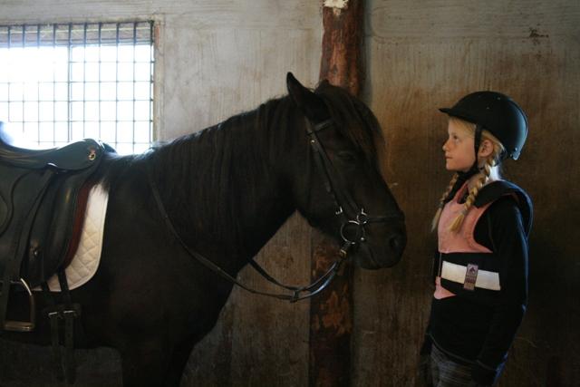 Pyssel med hästarna inför tävlingen