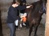 Anneli pysslar om hästen