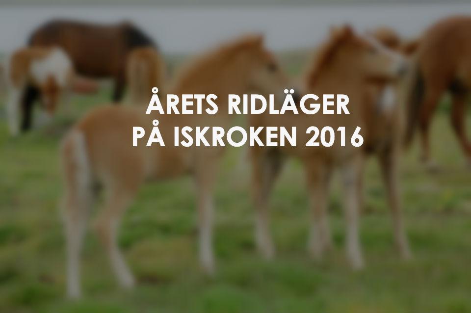 foal-621731_960_7201